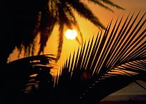 Silhouette of palm tree leaves with a setting sun in the background